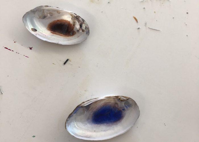 Perlmuscheln mit Farbe